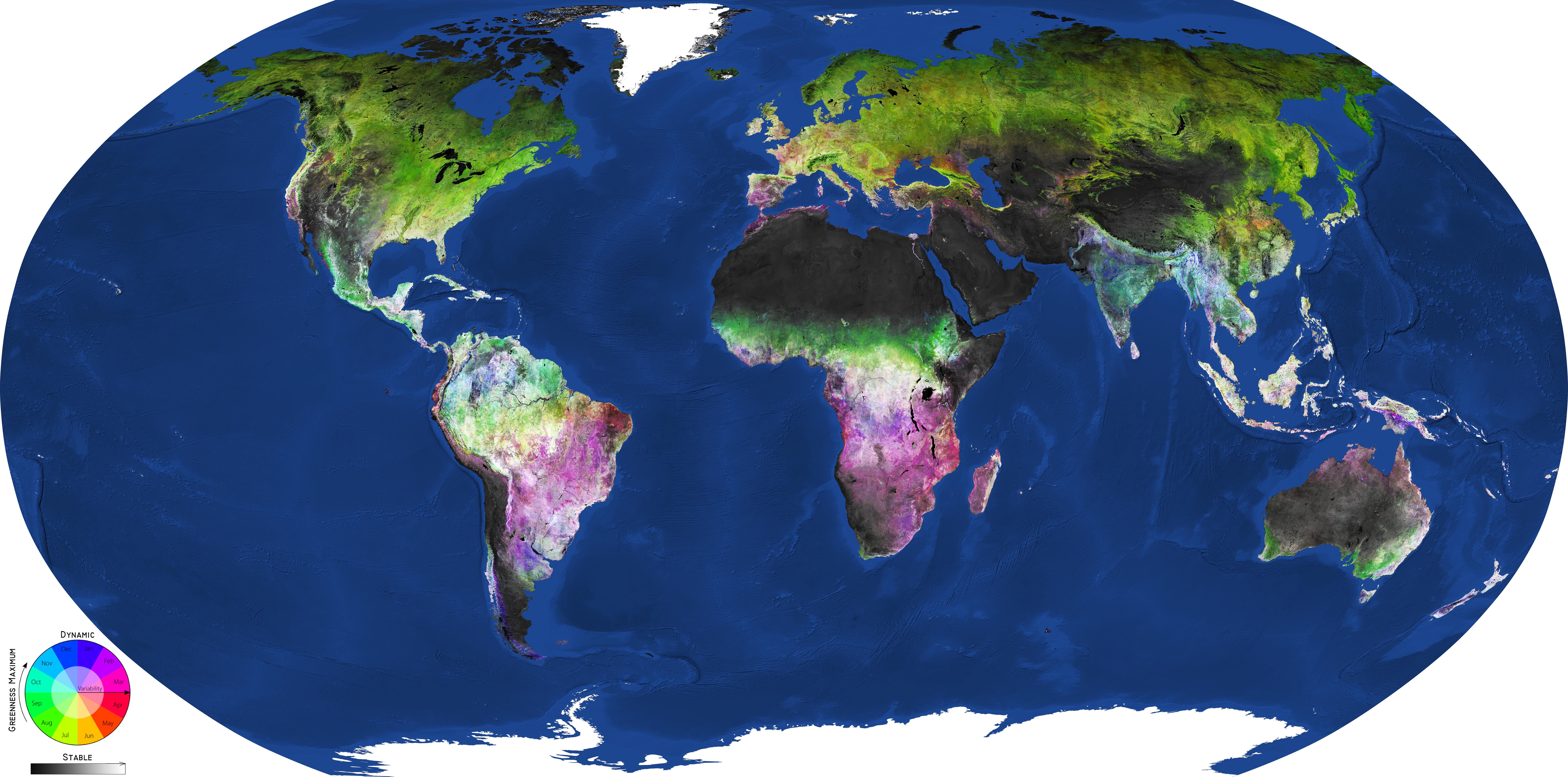 Jordas vegetasjonsdekke og når på året det når maksimal grønnfarge, sett av Sentinel-2. Rødt er på våren, grønt er på sommeren, blått er på høsten og lilla er på vinteren. Grafikk: Copernicus Sentinel data (2016–18) processed by GeoVille