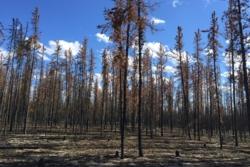 Etter kjempeskogbrann i Nord-Canada i 2014. Foto: NASA/X. Walker/Center for Ecosystem Science and Society at Northern Arizona University