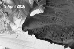 Isbremmen Nansen (til venstre i bildet) i Øst-Antarktis etter kalvingen av kjempeisfjellene (øverst i bildet) som delte isbremmen på tvers 7. april 2016. Her sett av Sentinel-1A den 9. april 2016. Foto: ESA