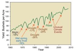 Effekten av tørke på maisavlinger per år i USA fra 1960 til 2009. Grafikk: USDA FAS