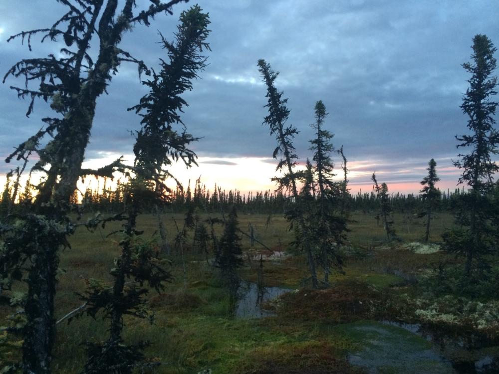 Myr i Alaska oppstått etter at jordsmonnet kollapser pga permafrost som tiner. Foto: NASA/N. Pastick/USGS Earth Resources Observation and Science