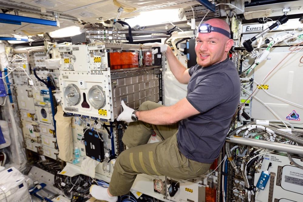 ESAs tyske romfarer, Alexander Gerst, ved Biolab, arbeidsstasjonen for biologiske forsøk i Columbus, den europeiske laboratoriemodulen på romstasjonen. Foto: ESA/NASA