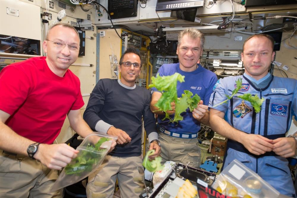 Astronautene på romstasjonen har også dyrket salat, men dette var ikke et planteforsøk styrt fra Norge. Foto: ESA/NASA