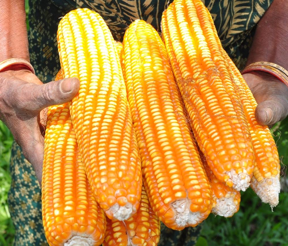 SMOS brukes til å måle jordfuktighet og beregne avlinger i landbruksområder, for eksempel sør for Sahara. Foto: B. Mahalder