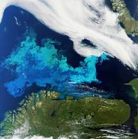 The satellite image shows an algal bloom in the sea off the coast of Northern Norway. Credit: ESA.