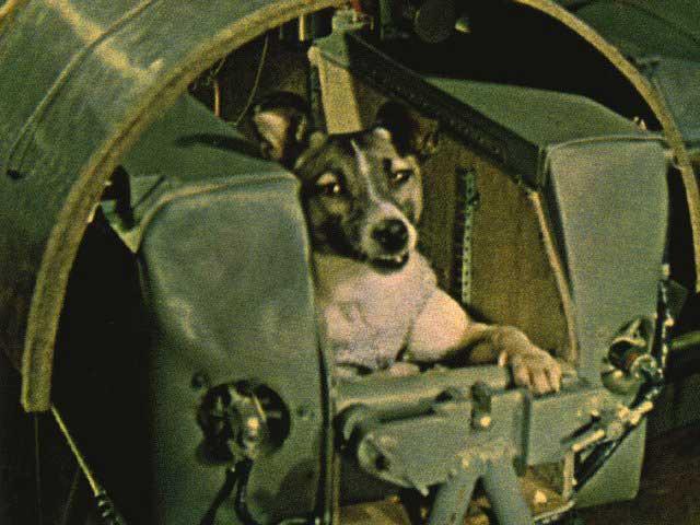 Hunden Laika ble skutt opp med Sputnik 2 den 3. november 1957. Foto: A. Chernov and the Virtual Space Museum